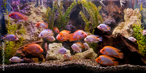 Tropical freshwater aquarium #45612687