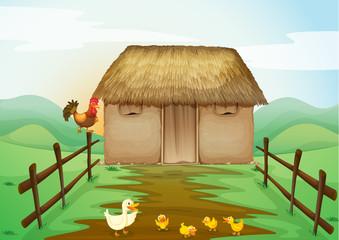 kućica i patke