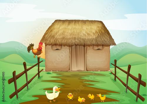 Spoed Foto op Canvas Boerderij house and ducks