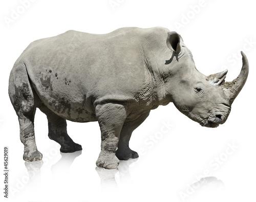 Foto op Aluminium Neushoorn Rhinoceros