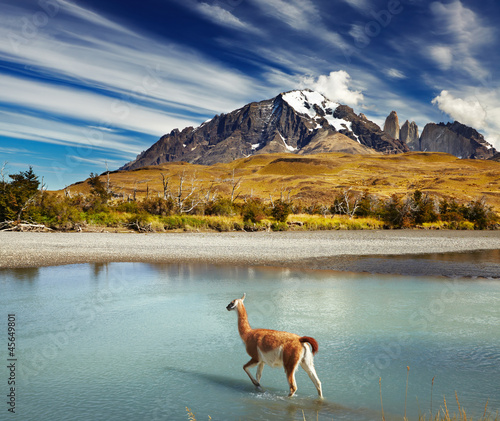 Foto op Canvas Lama Torres del Paine National Park, Chile