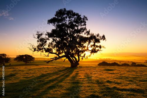 Printed kitchen splashbacks Australia Meadow Dawn
