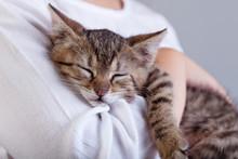 Holding A New Pet - A Little K...