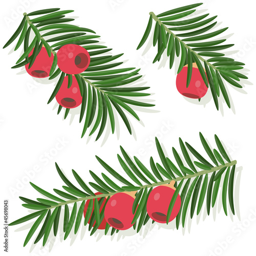 Fototapeta Yew sprigs with red berries isolated