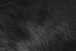 tekstura kozia skóra