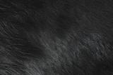 Fototapeta Zwierzęta - tekstura kozia skóra