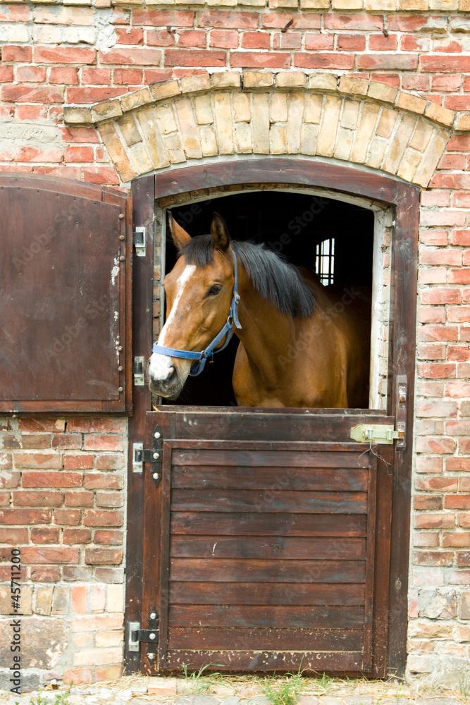 Fototapeta Koń w stajni