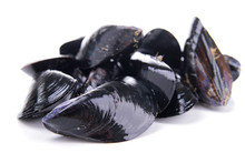 Isolated Mussels