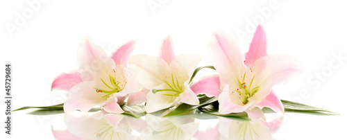 Photo  beautiful lily flowers isolated on white