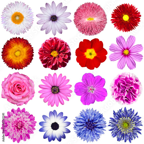 Tuinposter Gerbera Selection of Various Flowers Isolated on White Background