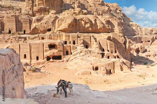 Fotografie, Obraz  Two tour donkies  in Ancient Petra city Jordan