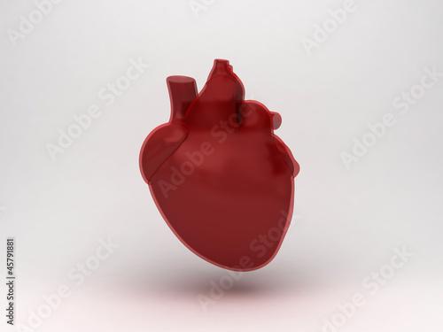 Fotografía  Anatomia cuore ventricolo
