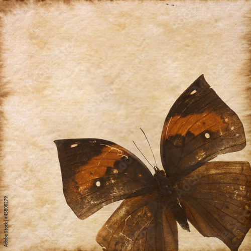 Foto op Plexiglas Vlinders in Grunge old grunge butterfly paper texture background