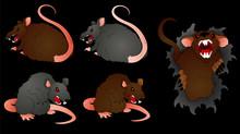 Rat Vectors