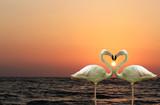 Romantyczne Flamingi na tle zachodzącego słońca