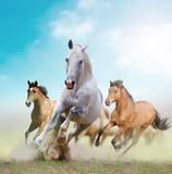 horses - 45838292