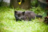 Fototapeta Zwierzęta - Kot