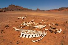 Animal Bones In The Desert