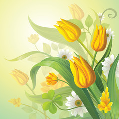 Fototapeta Tulipany yellow tulips