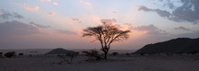 Tree In The Sahara Desert, Sun...