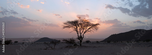 Staande foto Afrika Tree in the Sahara desert, sunset