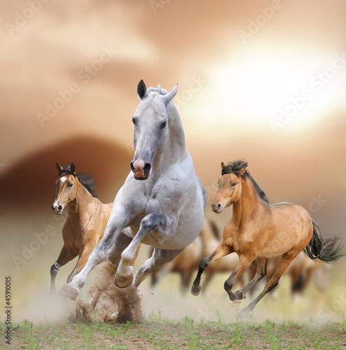Obraz Konie w zachodzie słońca - fototapety do salonu