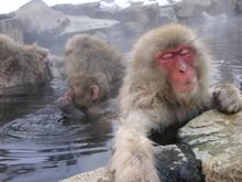 日本猿の冬の日課