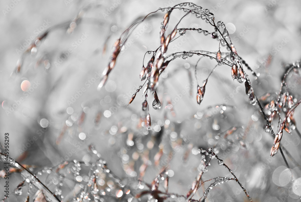 Fototapeta Przyroda Tatr 4