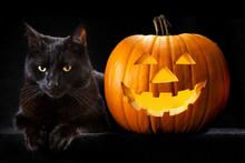 Halloween Pumpkin Black Cat