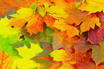 Naklejka na ściany i meble Herbstlicher Hintergrund