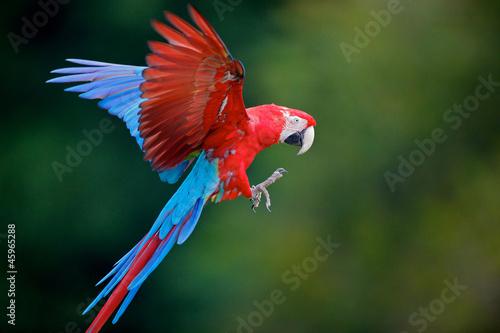 Spoed Foto op Canvas Papegaai perroquet