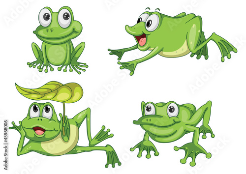 Photo green frogs