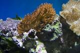 Fototapeta Do akwarium - Coral reefs
