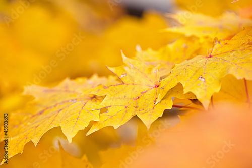 Poster Orange Buntes Herbstlaub