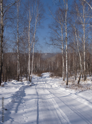 Stickers pour porte Bosquet de bouleaux Birch wood in the winter