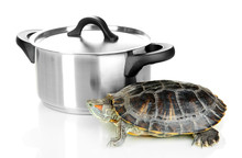 Red Ear Turtle In Pan Isolated...