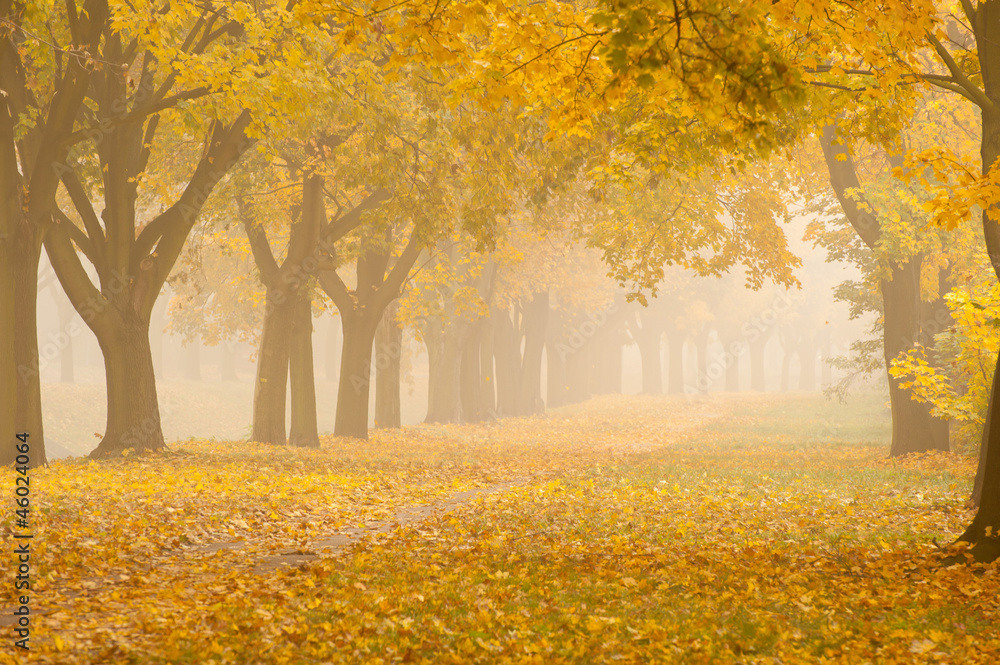 Fototapety, obrazy: romantic foggy autumn alley in a park