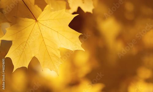 Fotorollo basic - Herbstblatt (von Mirko)