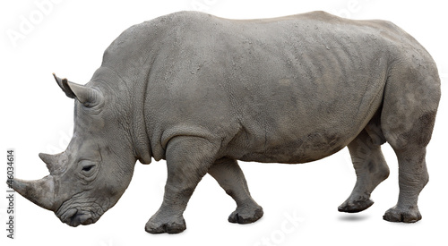 Spoed Foto op Canvas Neushoorn A white rhino on a white background yet visible