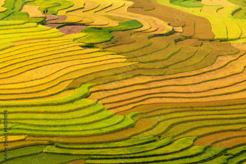 Photo  Terraced rice fields