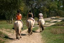 Randonnée à Cheval - Tourism...