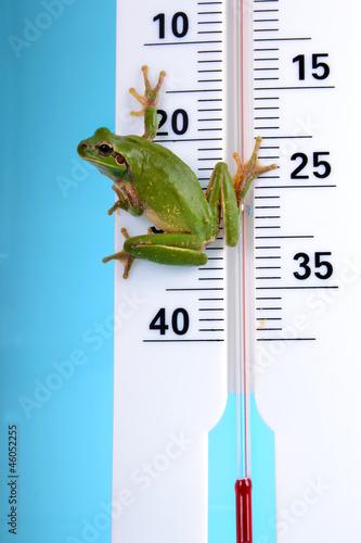 Météo - Rainette verte sur thermomètre 01 Canvas Print