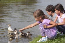 Little Girl At The Duck Pond