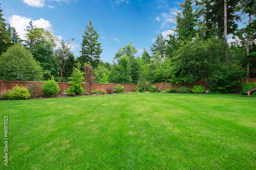 Green large fenced backyard with trees. Wallpaper Mural