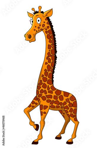 kreskowka-zyrafa