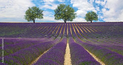 Fototapety, obrazy: Provence