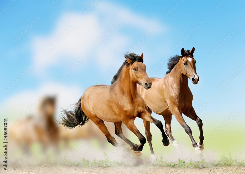 Fototapety, obrazy: Konie