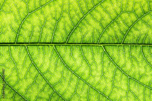leaf #46104467