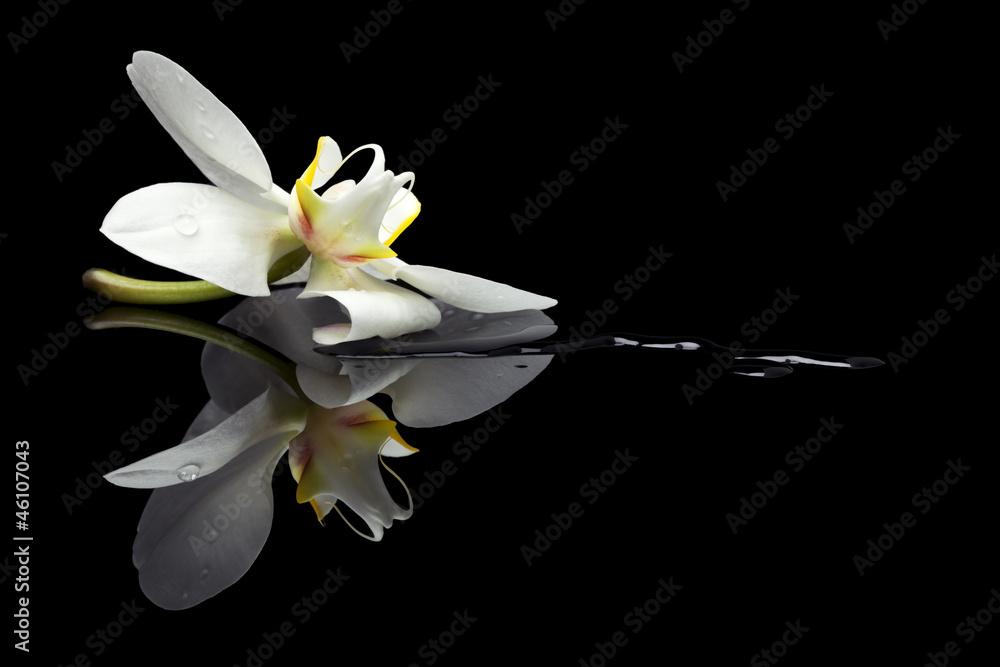 Fototapety, obrazy: Orchid blossom reflection
