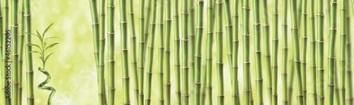 Tapeta bambusowa